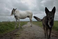 HorseandFlo